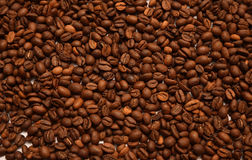 Coffee beans flat background. A lot of coffee beans lying flat brown background Royalty Free Stock Image