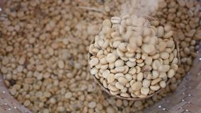 Coffee beans flow into the basket.  stock footage