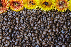 Coffee Beans and flower Royalty Free Stock Photography
