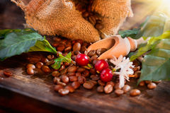 Coffee beans, flowers and berries on wooden table Stock Images