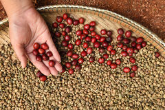 Coffee beans and fresh berries beans Stock Images