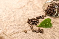Coffee beans with green leaf on brown burlap Royalty Free Stock Photo