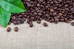 Coffee beans with green leaves on canvas. Stock Photos