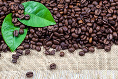 Coffee beans with green leaves on canvas Royalty Free Stock Photography