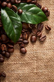 Coffee beans with green leaves Stock Image
