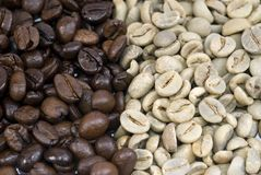 Coffee beans Green and Roasted Stock Photo