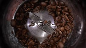 Coffee beans grind in a coffee grinder, barista prepare ingredients for work in slow motion