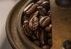 Coffee beans in the grinder Royalty Free Stock Image