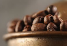 Coffee beans in the grinder Stock Image