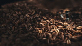 Coffee beans in the grinder stock footage