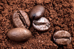 Coffee beans on the ground coffee Stock Images