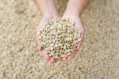 Coffee beans on hand Stock Photos