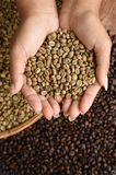 Coffee beans on hand. Close up of coffee beans on hand Royalty Free Stock Photography