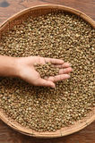 Coffee beans on hand. Close up of coffee beans on hand Royalty Free Stock Photo