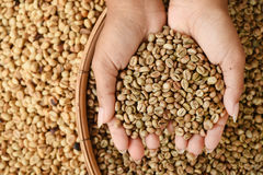 Coffee beans on hand Stock Image