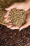 Coffee beans on hand. Close up of coffee beans on hand Stock Photography