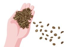 Coffee beans in hand and fresh brown coffee beans vector illustration
