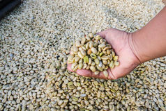 Coffee beans in hand stock photos