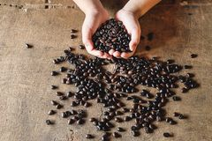 Coffee beans in hand stock image