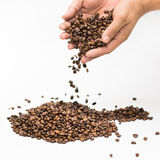 Coffee beans in hand white background.  Royalty Free Stock Photo