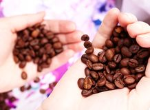 Coffee beans in hands Stock Image