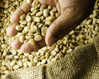 Coffee beans in hands. Background Royalty Free Stock Images