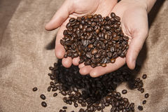 Coffee beans in hands. Close up Stock Image