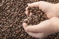 Coffee beans in hands with love heart on coffee background. Roasted coffee beans background stock photography
