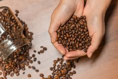 Coffee beans in human hands, in soft focus, in shape of heart stock images