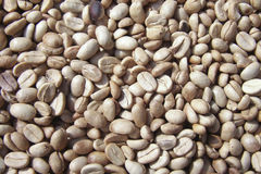 Coffee beans. That have not been roasted Royalty Free Stock Photo