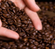 Coffee beans in human hand Royalty Free Stock Photography