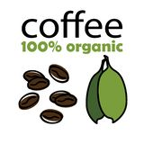 Coffee beans with leaves 100 percent organic vector illustration on white background. Coffee beans icon vectror illustration on white background. Eps10 vector illustration