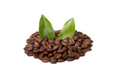 Coffee beans isolated. Coffee beans with leave isolated on white Stock Image