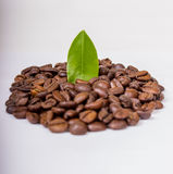 Coffee beans isolated. Coffee beans with leave isolated on white Royalty Free Stock Image