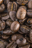 Coffee Beans. Coffee isolated beans on a plain background Stock Images
