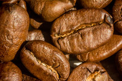 Coffee beans. Large grains of roasted coffee Stock Image