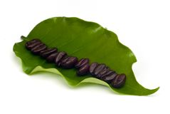 Coffee beans with leaf . Royalty Free Stock Image