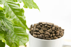 Coffee beans and leaf Stock Images