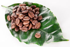 Coffee beans on leaf. Stock Photography