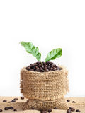 Coffee beans and leave Royalty Free Stock Images