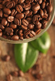 Coffee beans and leaves Stock Photography