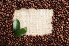 Coffee beans with leaves on burlap sack Stock Photo