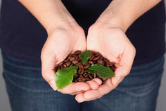 Coffee beans with leaves Stock Photography