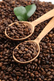Coffee beans with leaves in wooden spoon Royalty Free Stock Image