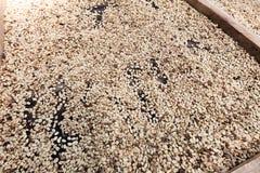 Coffee beans left rto dry royalty free stock photo