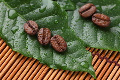 Coffee beans lying on the leaves Stock Images