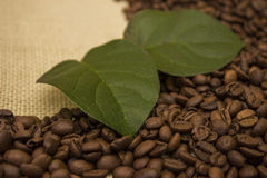 Coffee beans lying on the sacking Stock Photography