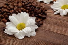 Coffee beans. Magic beans of coffee with rich aroma adorned with white flowers Royalty Free Stock Images