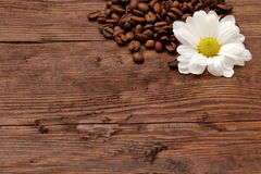 Coffee beans. Magic beans of coffee with rich aroma adorned with white flowers Royalty Free Stock Photos