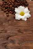 Coffee beans. Magic beans of coffee with rich aroma adorned with white flowers Stock Images